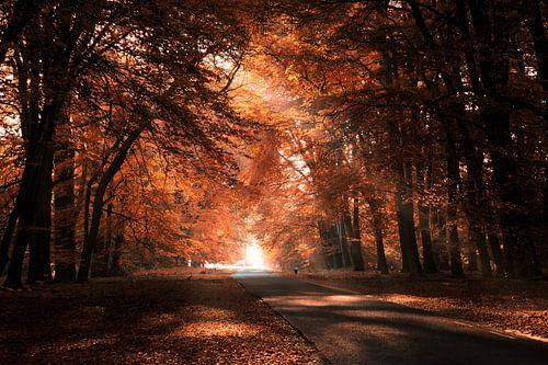 Autumn leaves 3 van