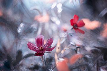 Une autre fleur, une autre histoire, Fabien BRAVIN van 1x
