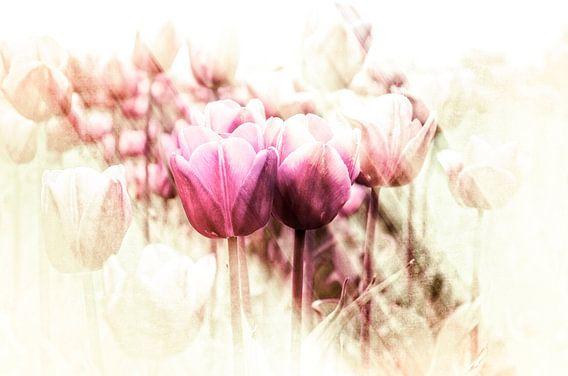 Een glimp van de lente van Wil van der Velde/ Digital Art
