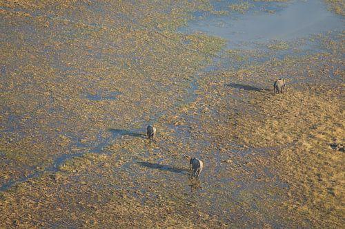 Olifanten vanuit de lucht in de Okavango Delta in Botswana van Remco Phillipson