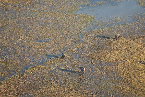 Olifanten vanuit de lucht in de Okavango Delta in Botswana