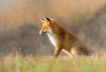 Fantasy Fox van Anna Stelloo