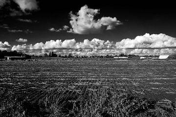 wide fields von Ann Beckers