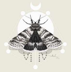 Moth van