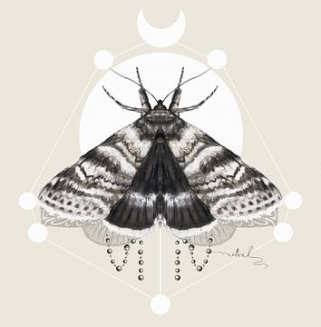 Moth sur Nettsch .