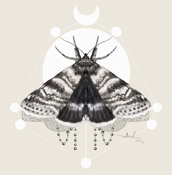 Moth van Nettsch .