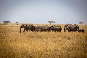 Kudde olifanten op de Serengeti van Julian Buijzen