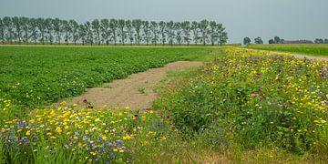 Fleurs sauvages à Groningen sur Annie Keizer