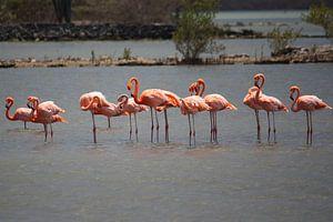 Flamingo party 2