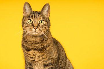 Portret van een tabby kat met gele achtergrond van Leoniek van der Vliet