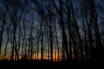 Zonsopkomst in het bos van Discover Dutch Nature
