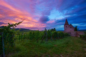 Kirche auf den Weinfeldern von Hunawihr von Discover Dutch Nature