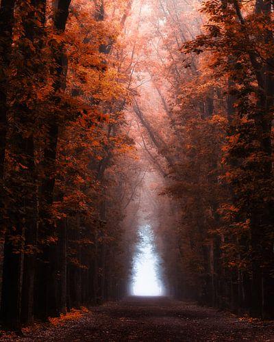 Oranje mystiek van Tvurk Photography