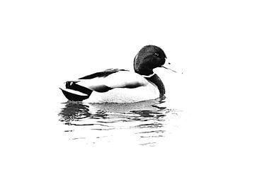 Mannetjes eend op het water (zwart-wit) van Art by Jeronimo