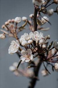 Blüte 16