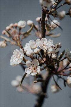 Blüte 16 von Isis Sturtewagen