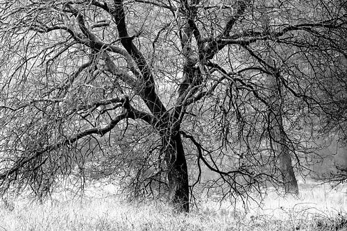 one tree van jowan iven