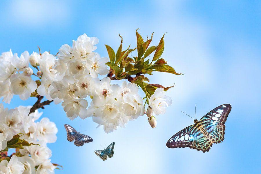 Lente in de boomgaard