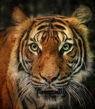 Tiger von Vera Kämpfe