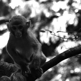 Nieuwsgierig aapje van Zoe Vondenhoff