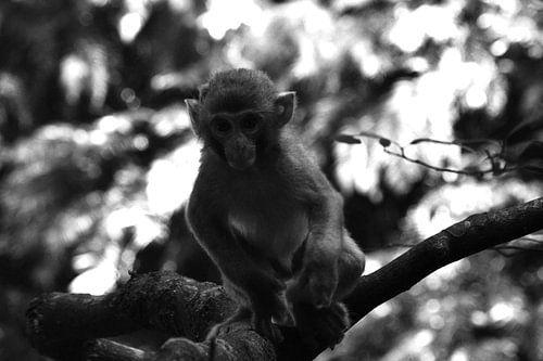 Nieuwsgierig aapje van