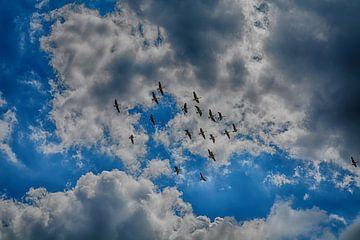Ganzen in de lucht van Hanneke Duifhuize