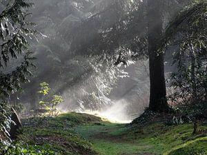 Zonsopkomst in het bos van