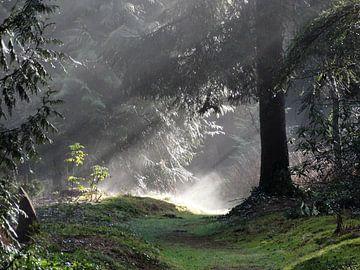 Zonsopkomst in het bos von El'amour Fotografie