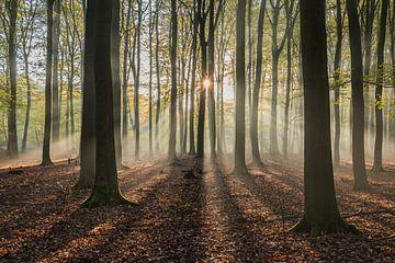 Sonnenharfen von Jeroen de Jongh