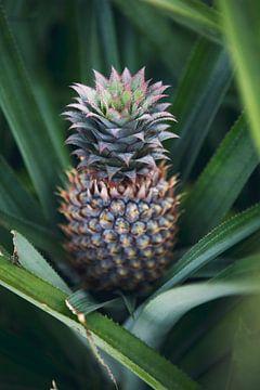 Ananas in het groen - Frans Polynesië reis fotografie print van Freya Broos