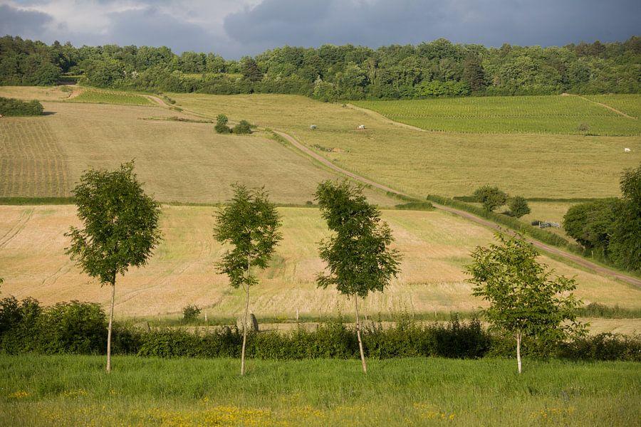 Bomen voor korenveld
