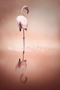 Flamingo reflection