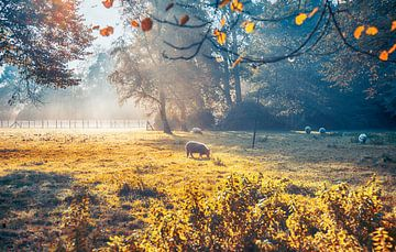Nederlandse ecologische boerderij van