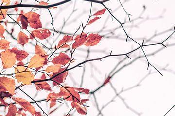 Gouden herfstbladeren van Florian Kunde