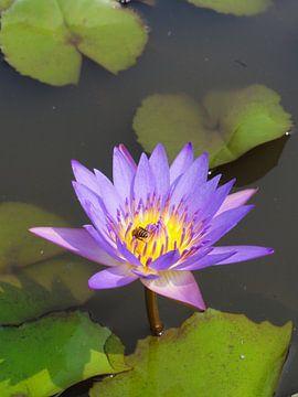 Lila Lotus met insect van Lotte Veldt