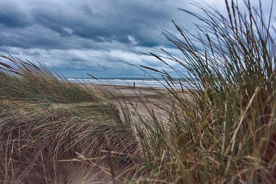 Het Hollandse Strand van Alex Hiemstra