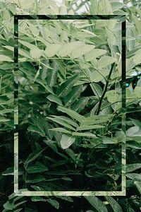 Natuur - Green Leaf van