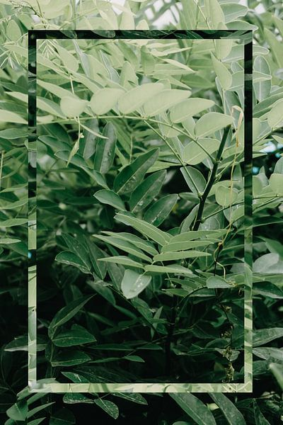 Natuur - Green Leaf van Mandy Jonen