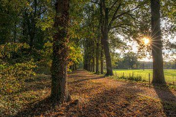 Herfst in het bos van Moetwil en van Dijk - Fotografie
