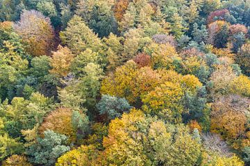 Herbstliche Blattfarbe von oben von Jeroen Kleiberg