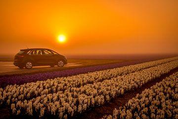 Hyacint Car van Peter Heins