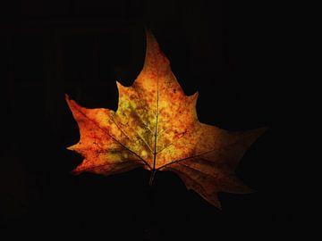 Herbst von Maikel Brands