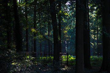 Licht door het donkere bos. van Luca Claes