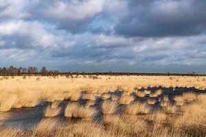 Dunkle Wolken sammeln sich über dem Moor.