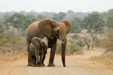 Moeder olifant met haar baby. van Kirsten Bos