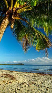 4 Mile Beach, Port Douglas; Far North Queensland - Australia