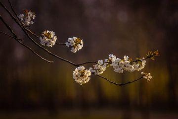 Blüte von Elsbeth Beltman