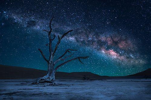 Dead Tree and Milky Way van