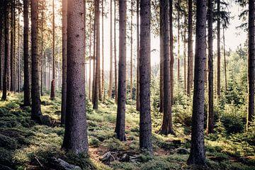 Verträumter Wald von Oliver Henze