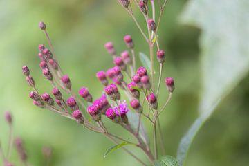kleine roze bloemetjes van Tania Perneel